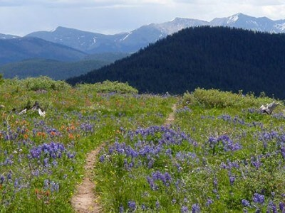 Vail Mountain Bike Trails