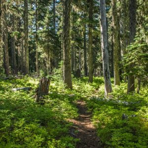 Adopt-A-Trail Lottery June 21, 6pm at the Dusty Boot in Beaver Creek